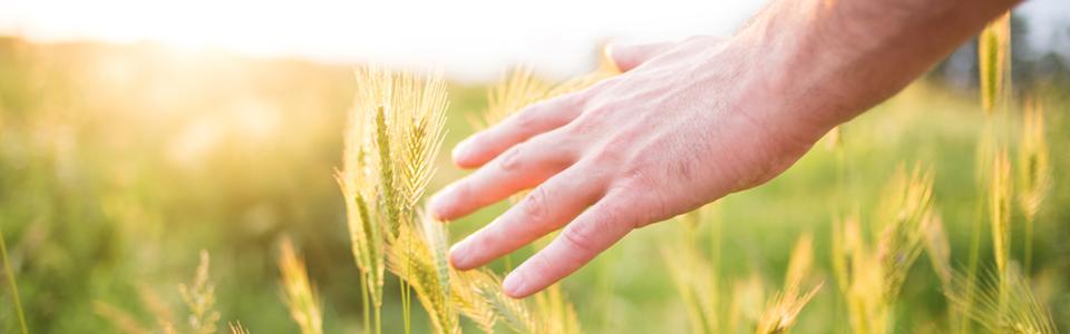 hand touching wild grasses