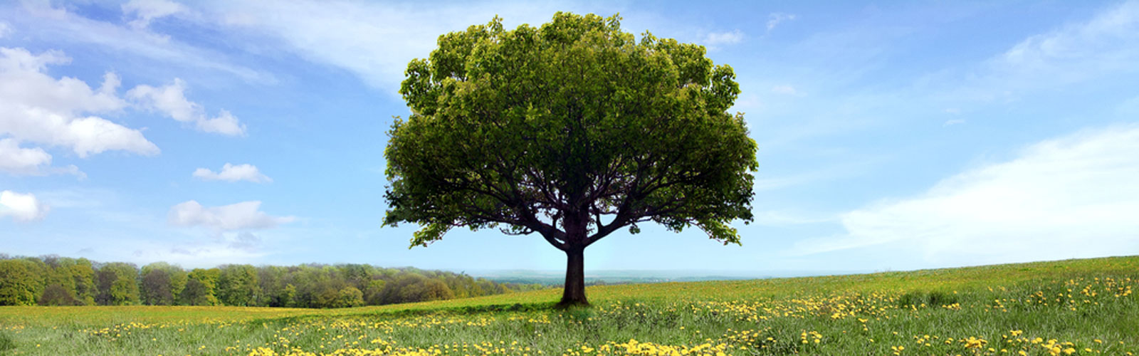 a mature tree in an beautiful green landscape
